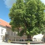 Lindenhof Innenhof